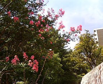 空に向かって咲く花