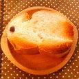 パンうさぎ